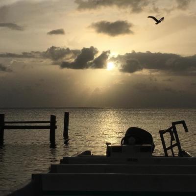 ベリーズでダイビング&海洋環境保護 片岸典子